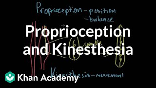 Proprioception and kinesthesia | Processing the Environment | MCAT | Khan Academy