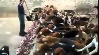 Самые голодные собаки