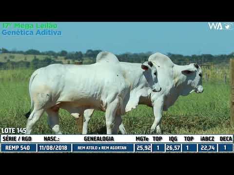 LOTE 145 - DUPLO - REMP 540, REMP 677 - 17º Mega Leilão Genética Aditiva 2020