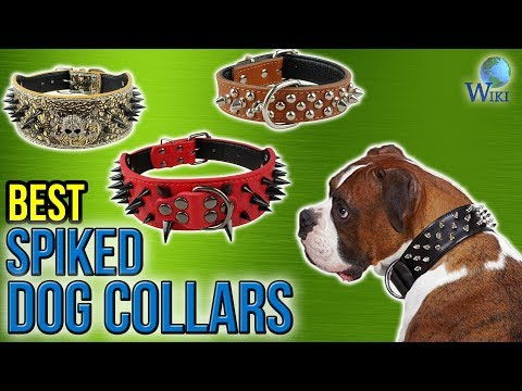 10 Best Spiked Dog Collars 2017