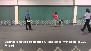 Greater Miami Dog Club Show & Trials - Dog And Puppy Obedience Training In Miami, Fl