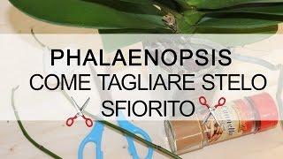 Giardinaggio sinonimo for Nuovo stelo orchidea