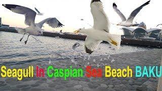Baku ( Baki ) Caspian Sea Beach Amazing Seagull Flying & Playing   Travel With MD Vlog - 8
