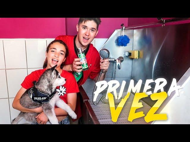 BAÑAMOS AL CACHORRO DE MI PRIMO SHOOTER POR PRIMERA VEZ (HUSKY SIBERIANO)