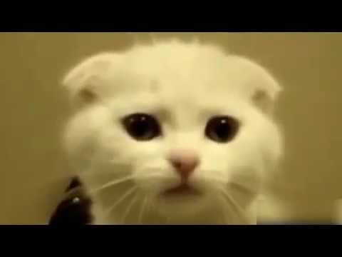 TOP Funny Cat and dog Dancing and singing