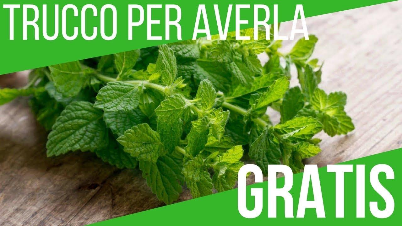 gramignone come prato ? | Forum di Giardinaggio.it