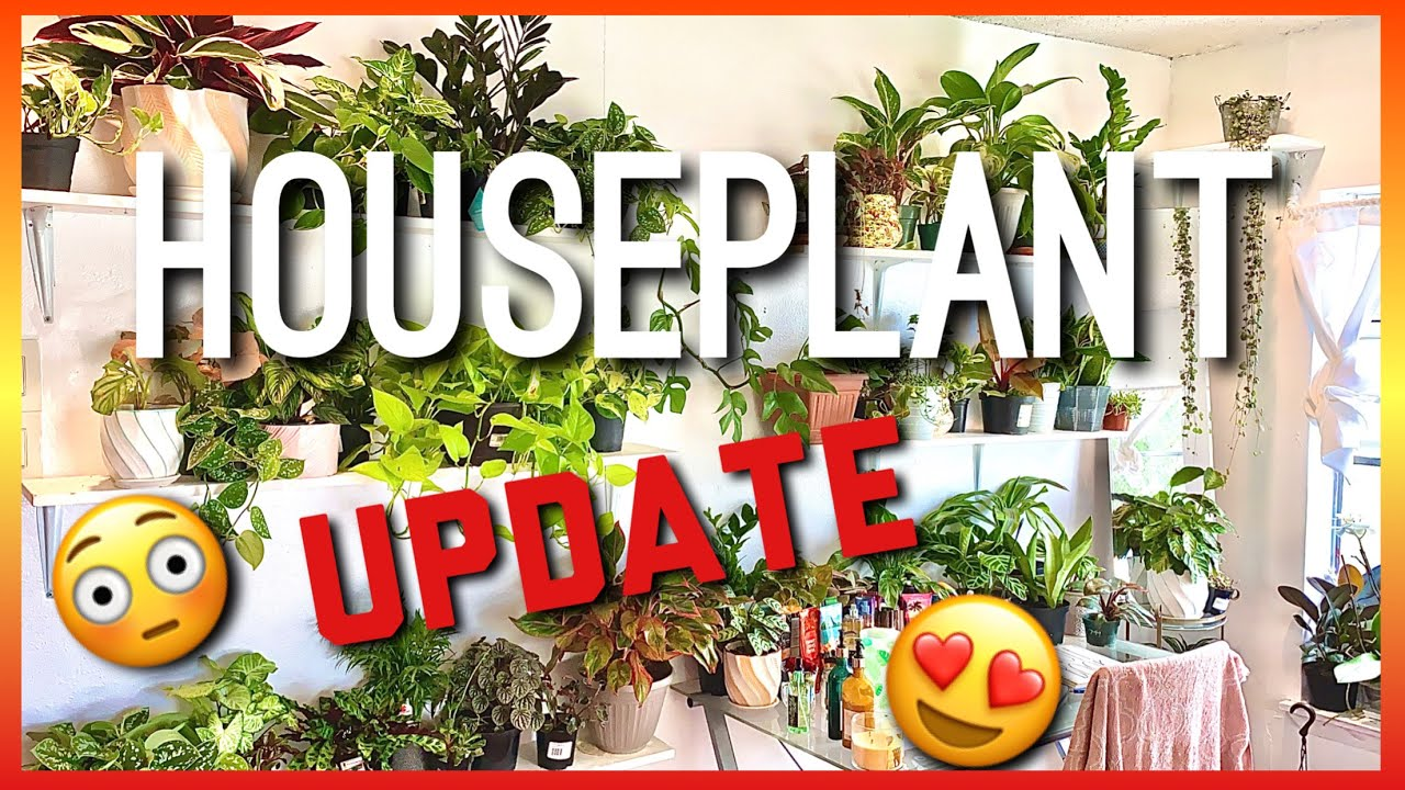 July Houseplant Update! Mini Bedroom Houseplant Tour! How are my indoor plants doing? Plant Update!