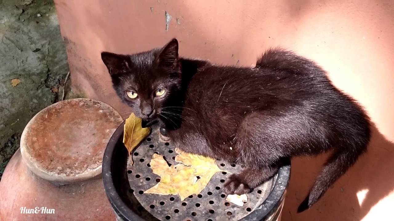 Sevimli Kedi Yavrularinin Oyunlari 1 Youtube