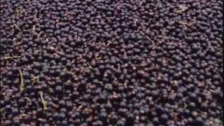 Just the Berries New Zealand Blackcurrants