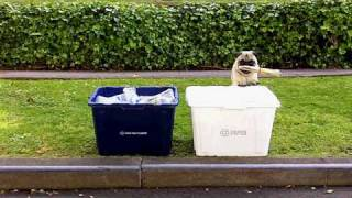 Green Pug Recycles! And Changes Lightbulb, Carpools...