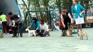 Выставка собак всех пород г.Чита 23 мая 2015г.