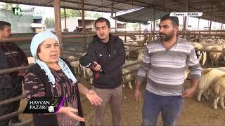Hayvan Pazarı - Kangal 2 Adet Erkek Toklu Fiyatı  / Adana - 2018