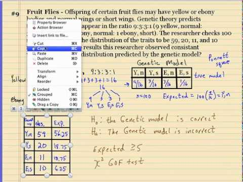 Chi-square punnett square solution - YouTube