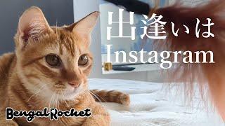 【海外の猫たち】保護猫の茶トラ猫のチャコと里親さんの奇跡的な出会い【ベンガルロケット♯106】