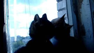 Кот Гришка и старая кошка.