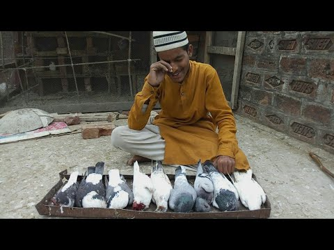 Cat attack in chote ustad loft | chote ustad crying, cat killed his pigeon | crying or overacting