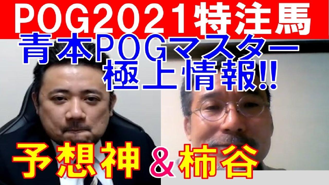 【POG2021】青本の頭脳「柿谷陽介」が登場!今年のPOGイチオシ馬を大公開!