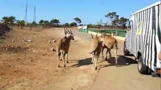 Safari Zoo Mallorca - Antilopenfütterung
