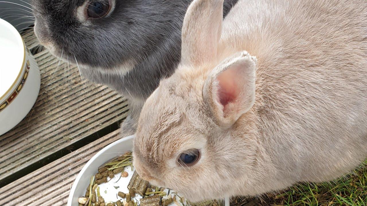Live bunny cam