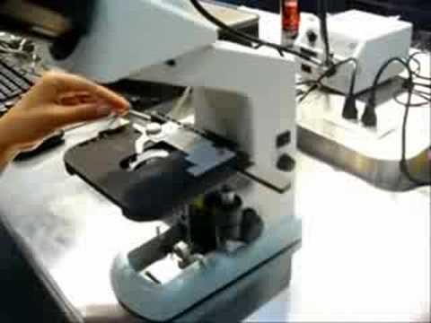 Mantenimiento del Microscopio Optico  YouTube