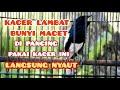 Kacer Lambat Bunyi Macet Di Pancing Pakai Ini Langsung Nyaut Kacer Gacor Ngeplong  Mp3 - Mp4 Download