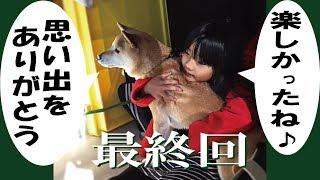 昨年2018新潟県南魚沼での雪遊びの動画の第4弾(最終回)です。甲斐犬ハル...