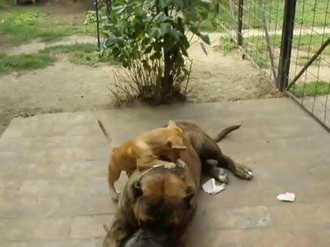 Apolló és Lili Nagy kutya és kis kutya