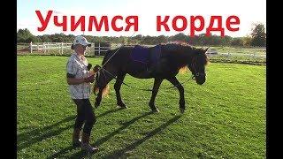 Начало работы на корде и как учить лошадь командам. Толковый Парень.