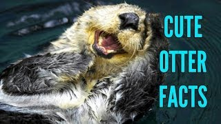 8 Cute Sea Otter Facts