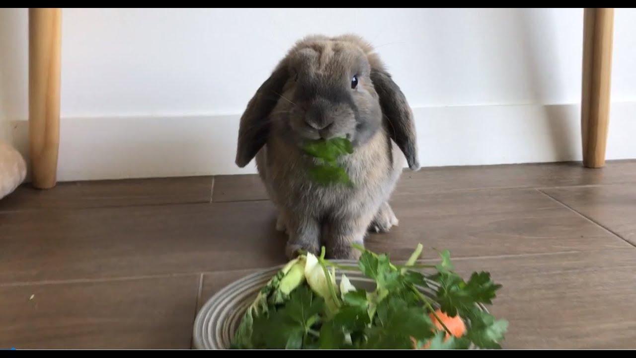 7 Reasons Why Rabbits Make Great Pets Youtube