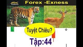 Forex -Exness. tập 44,Theo Dõi Con Mồi,Những Tuyệt Chiêu Đánh Ngắn Hạn,Trader Scalping M5, M30