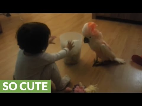 Baby and cockatoo engage in precious playtime