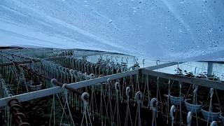 Обзор Цветов В Зимней Теплице на 20 Декабря.