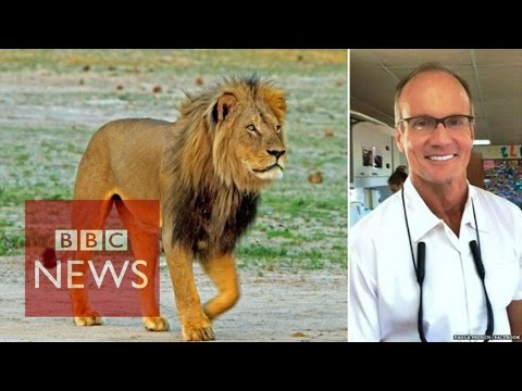 Cecil the lion: US hunter 'regrets' killing - BBC News