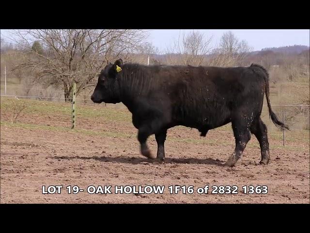Oak Hollow Lot 19