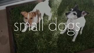 Grass Dog Potty Subscription - Doggy and the City