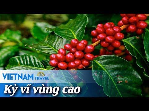 Đắk Lắk: Ngây ngất từng giọt đắng Buôn Mê   Vietnam Travel