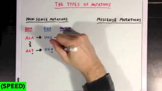 [SPEED] The Different Types of Mutations
