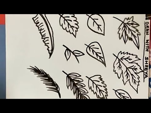 How to Draw Different types of leaves in very easy steps