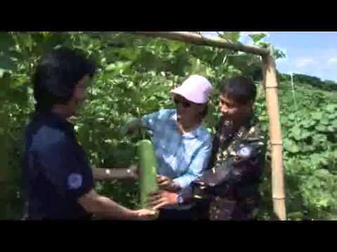 Hardin ng Lunas at Camp Servillano  Aquino