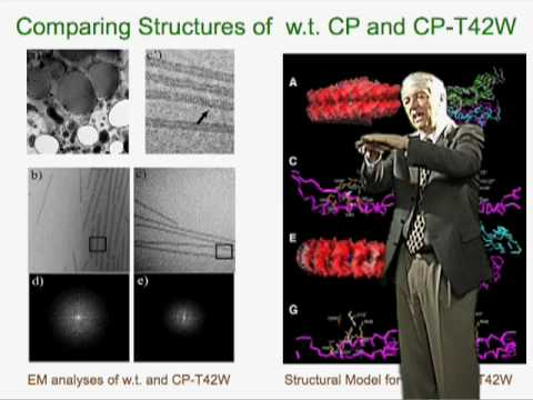 Roger Beachy (Danforth Center) Part 2: Genetic Engineering for Virus Resistance in Plants