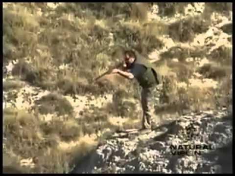 Κυνήγι τριχωτών θηραμάτων με ραβδωτά όπλα!