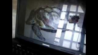 Tartaruga pirando ao som de Asa de Águia