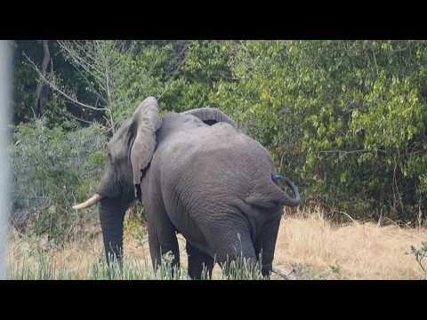 P1271529   Manke olifant Murchison Falls NP