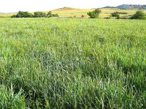 Windsor Davies & Don Estelle Whispering Grass