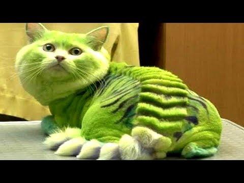 ТОП 10 НЕОБЫЧНЫХ пород кошек которых нельзя завести. Это должен знать каждый