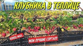 КЛУБНИКА В ТЕПЛИЦЕ,секрет большого урожая/ЛУЧШИЕ СОРТА КЛУБНИКИ!!!