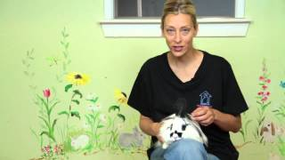 What Can I Feed My Lionhead Rabbit? : Rabbit Care