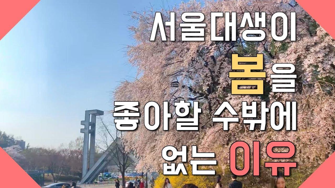 [뿌샤뿌샤] 서울대의 봄