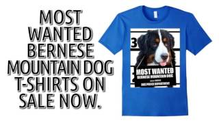 Bernese Mountain T-Shirt - Men's, Women's, Kids - Grays, Olive, Royal Blue, Yellow etc.